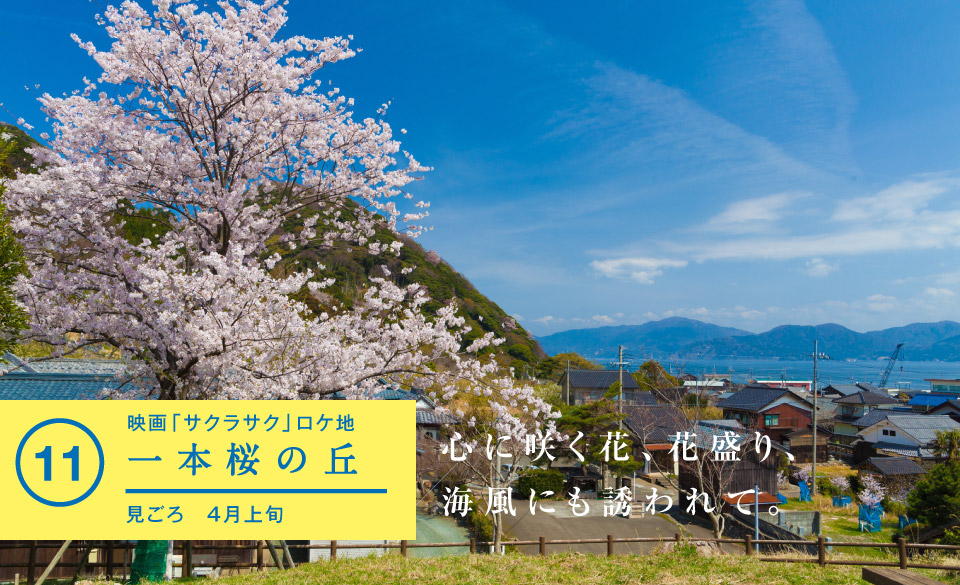 一本桜の丘 - 若狭美浜旬の88ヵ所