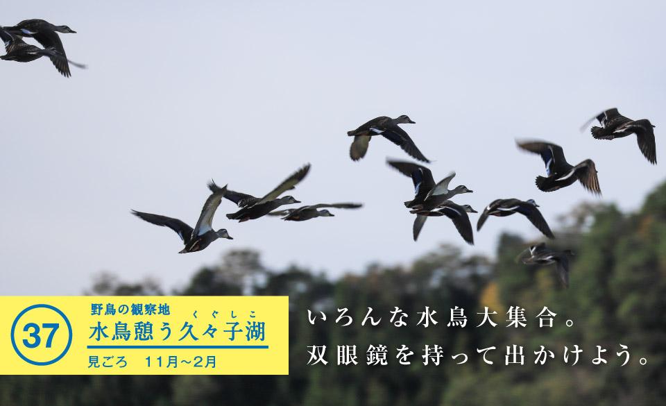 水鳥憩う久々子湖 - 若狭美浜旬の88ヵ所