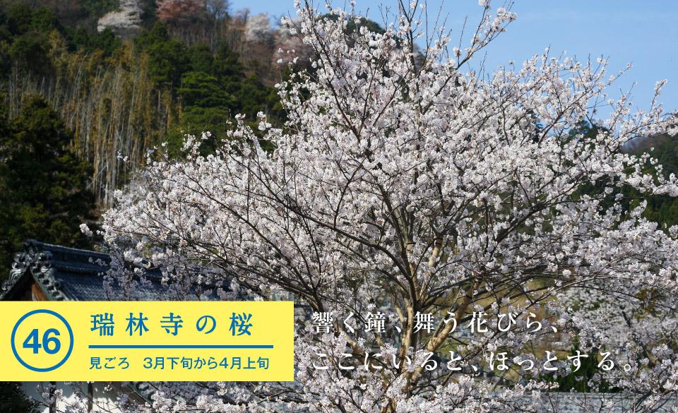 瑞林寺の桜 - 若狭美浜旬の88ヵ所