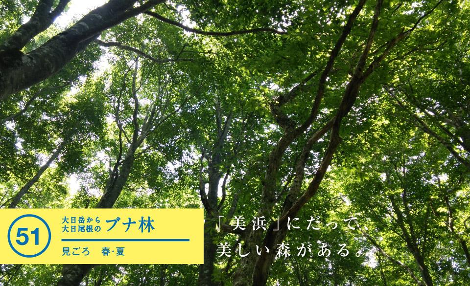 大日岳から大日尾根のブナ林 - 若狭美浜旬の88ヵ所